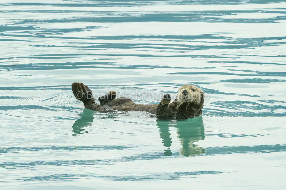 Otter Applause