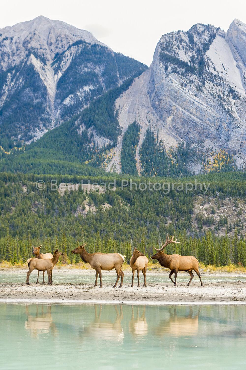 Herd Reflection