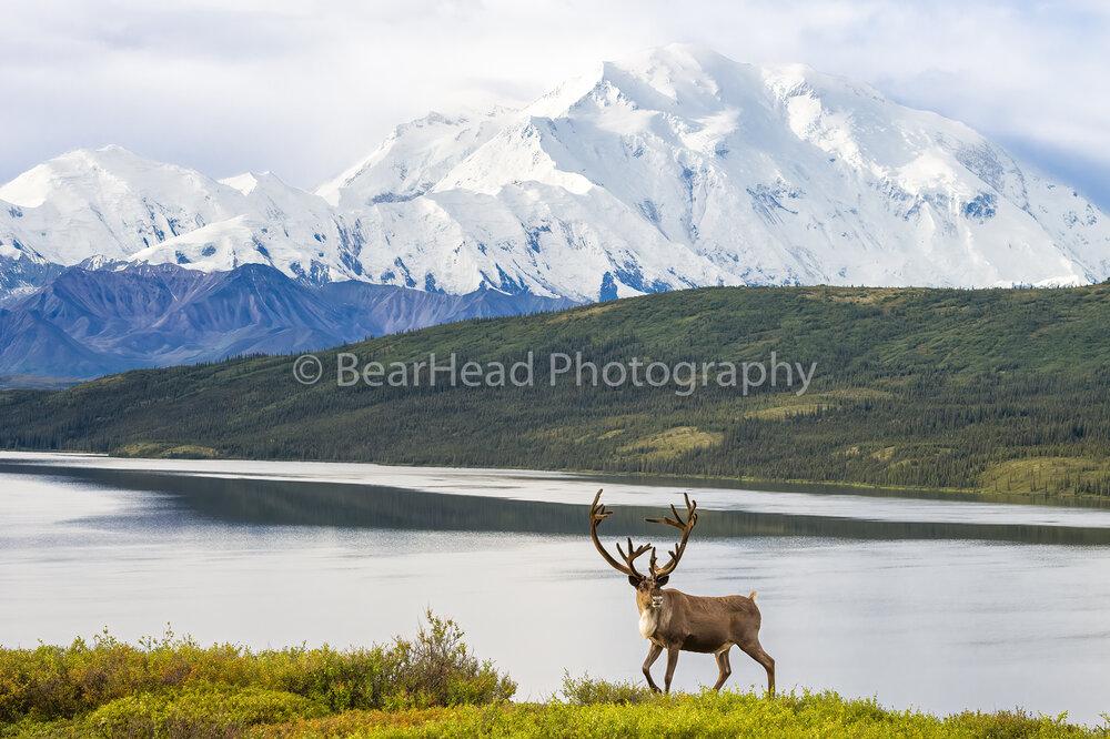 Wandering Alaska
