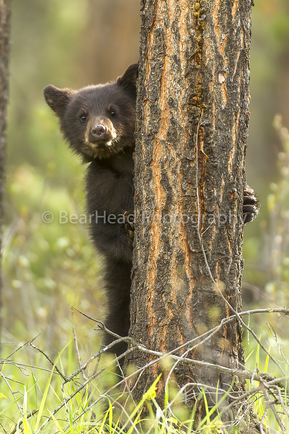 Tree Hiding