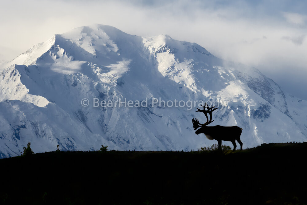 The Great Caribou