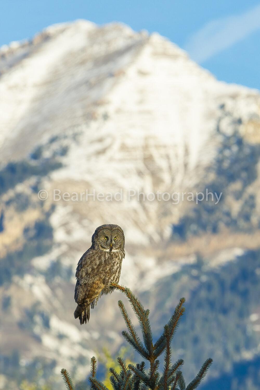 Mountain Perch