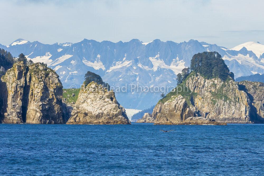 Whale's Paradise