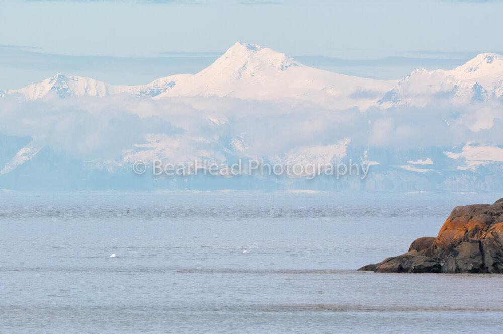 Beluga Waters
