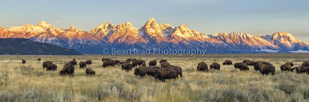 Bison Range
