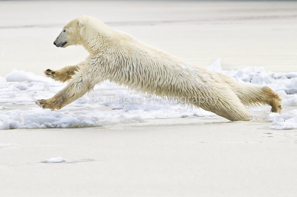 Jumping Ice