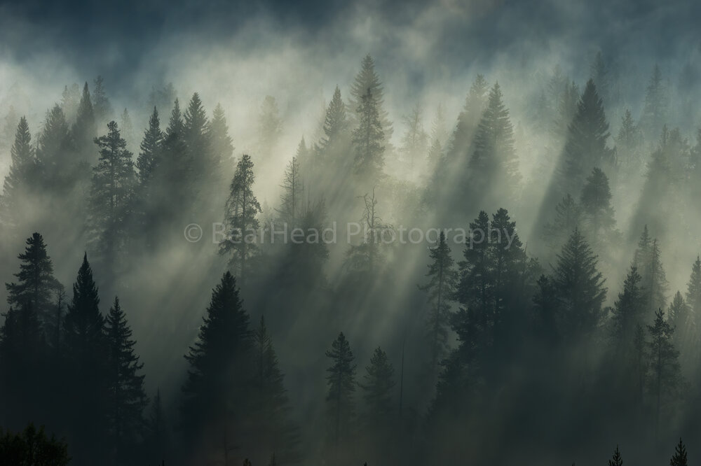 Rising Forest