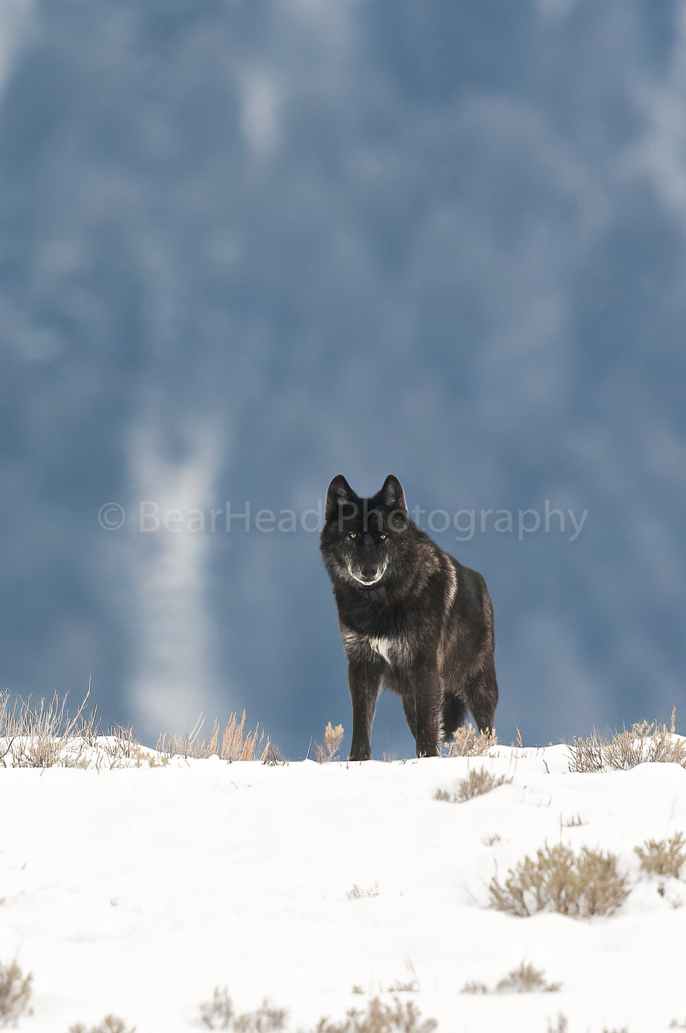 Wolf View