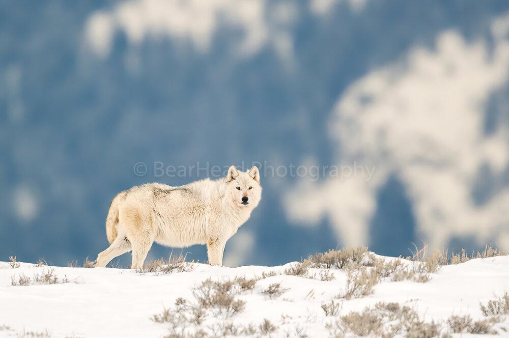 Winter Protector