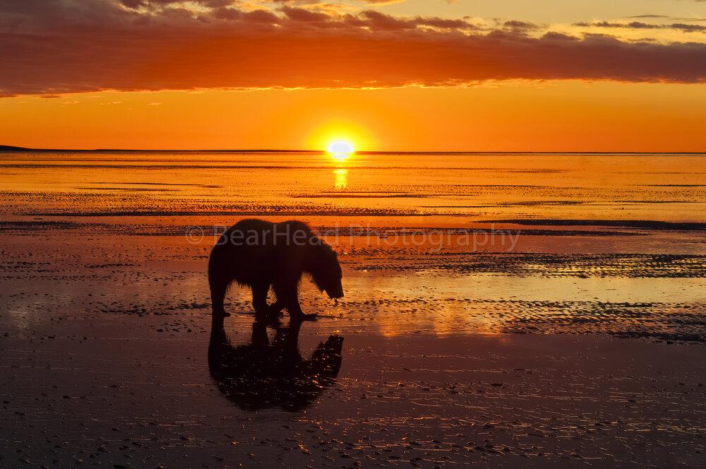 Sunrise Clamming