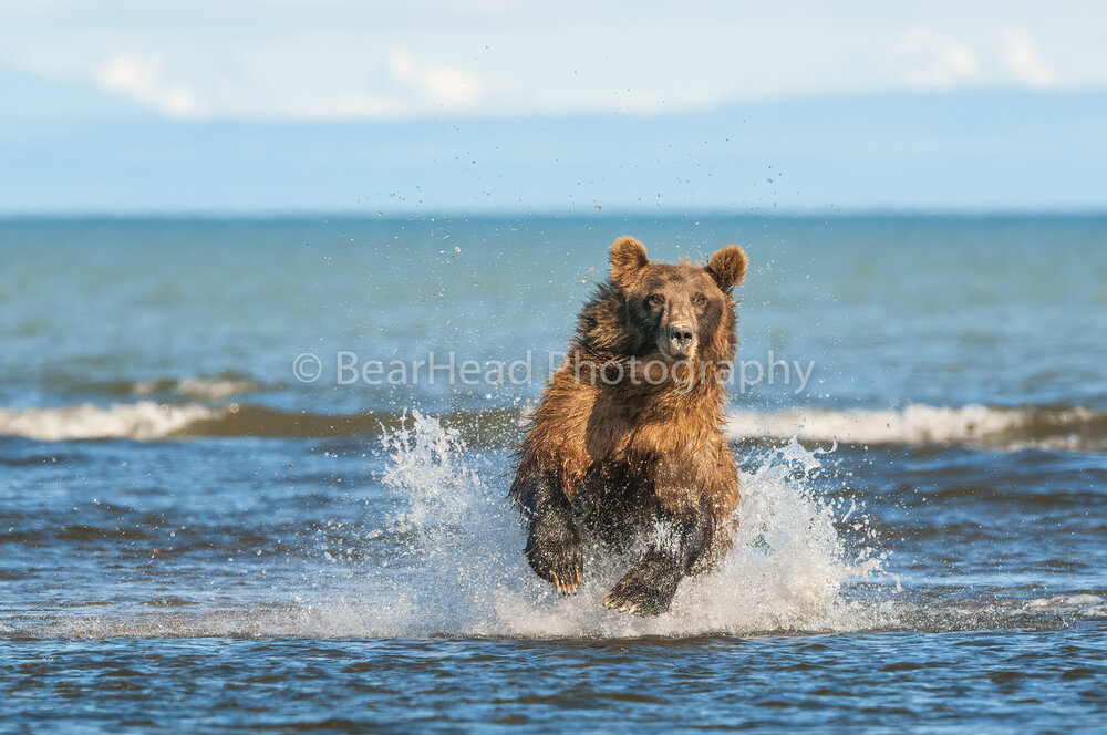 Excited Bear