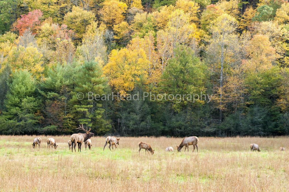 Smoky Elk