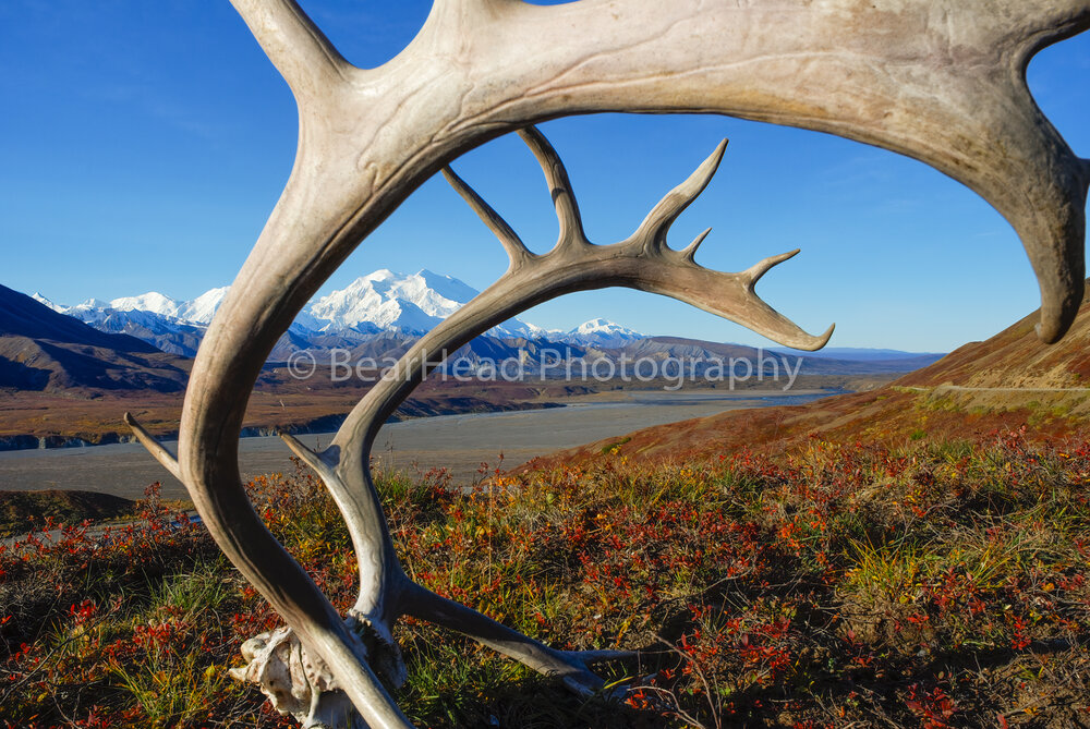 Mountain Antlers