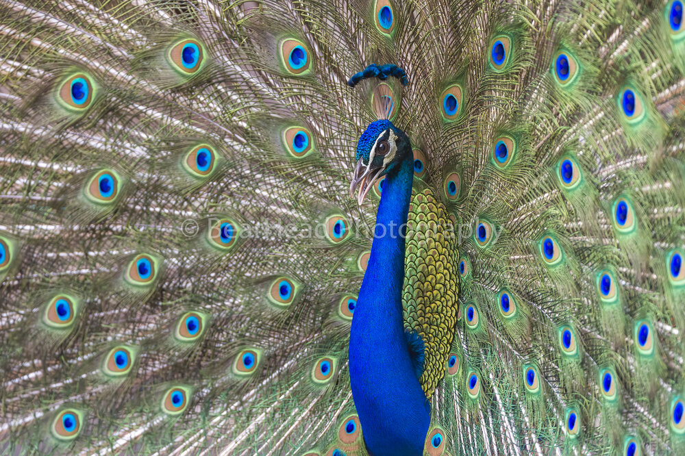 Feathery Design