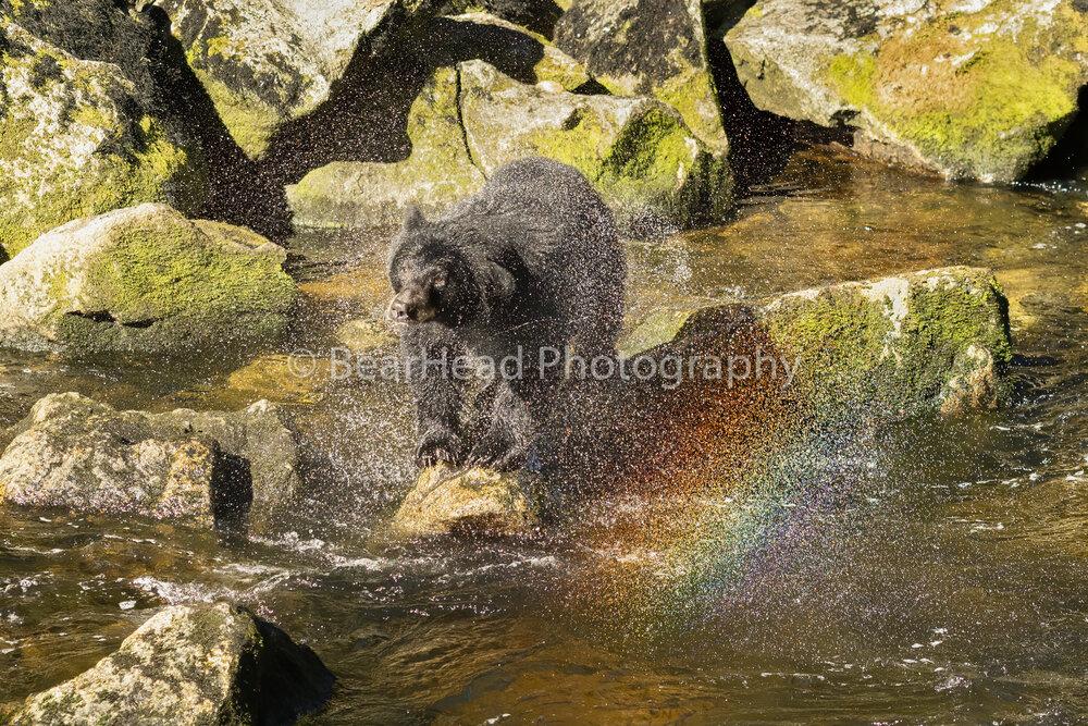 Rainbow Shake