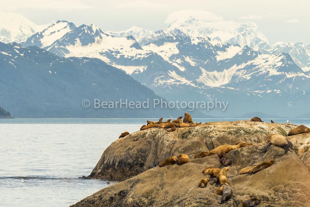 Resting Rocks