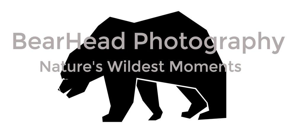 Moose Bearhead Photography Blog Bearhead Photography