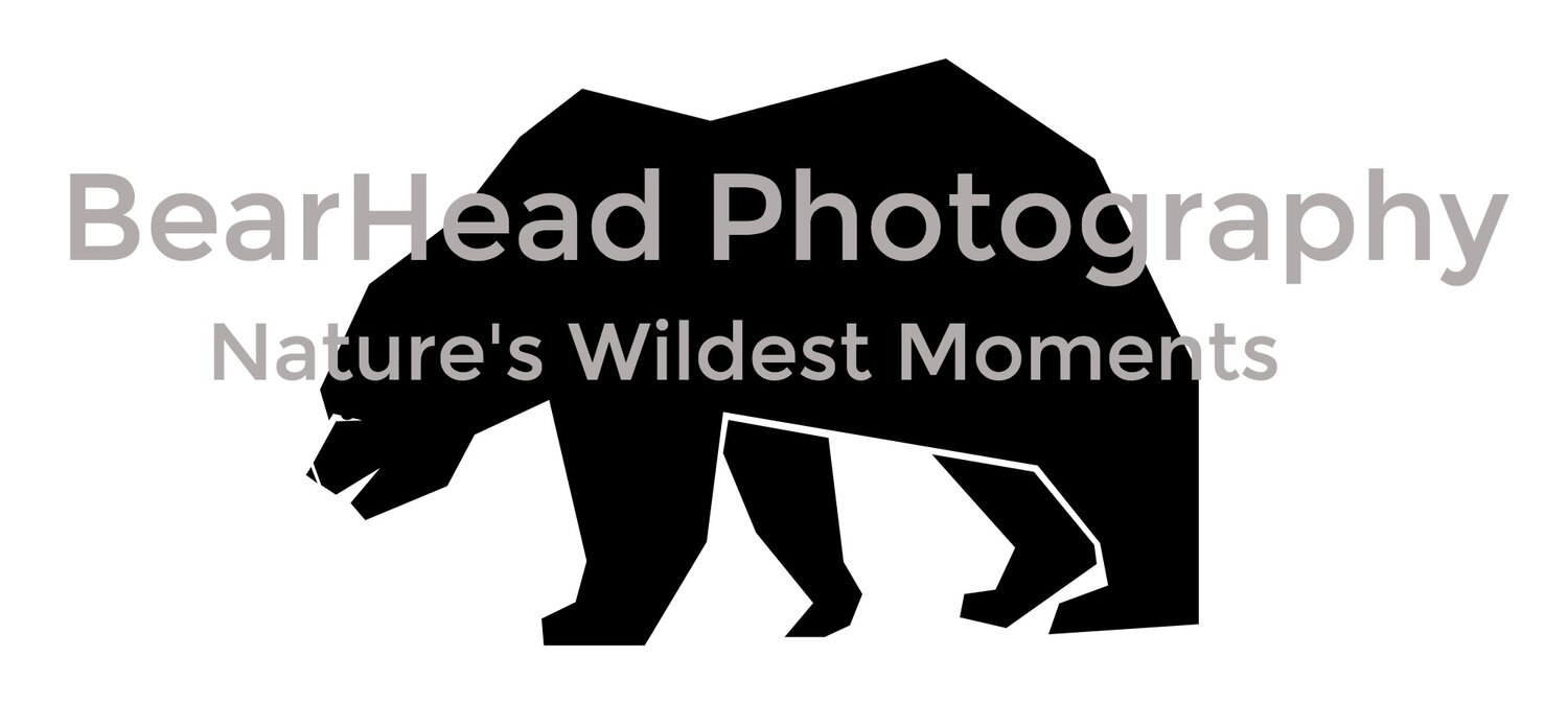 BearHead Photography