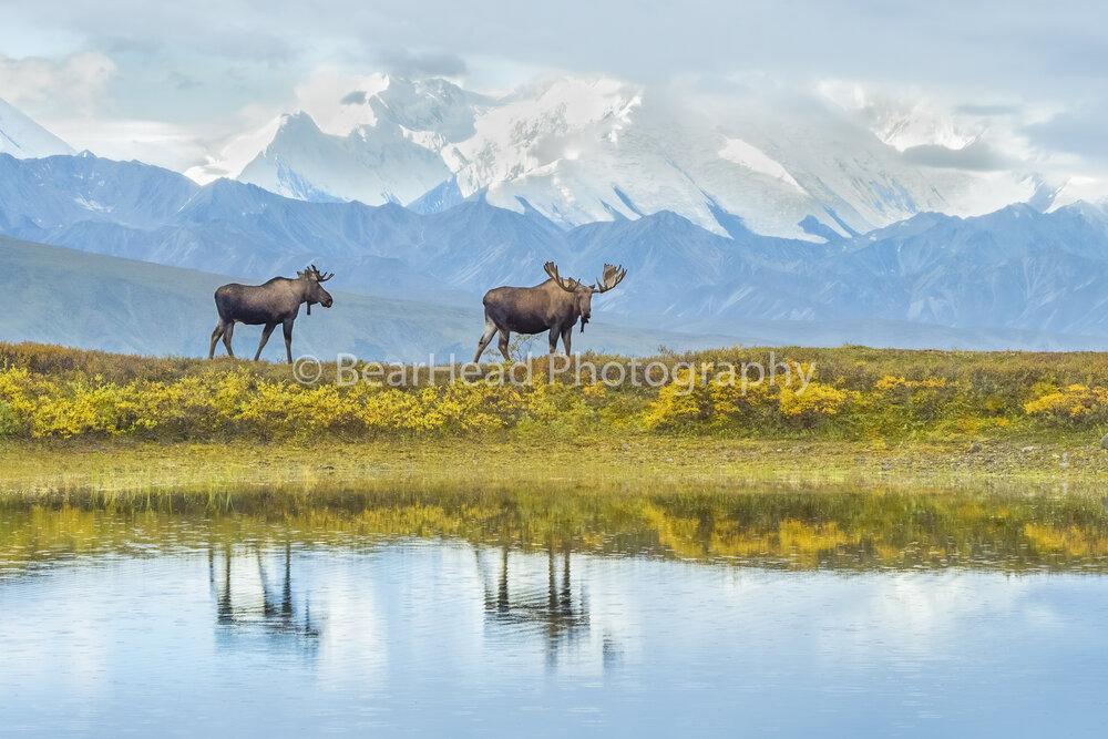 Alaskan Reflections