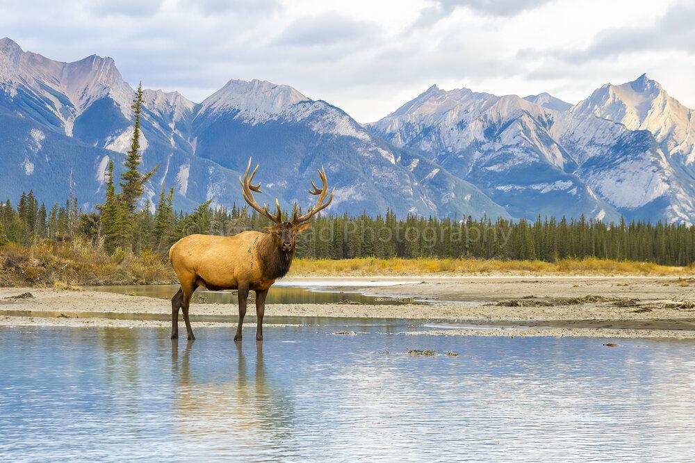 Elk Range