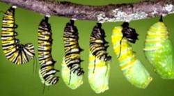 butterfly-cocoon-03-02.jpg