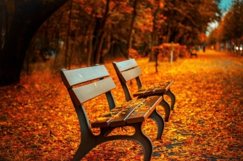 autumn-avenue-bench-40884.jpg
