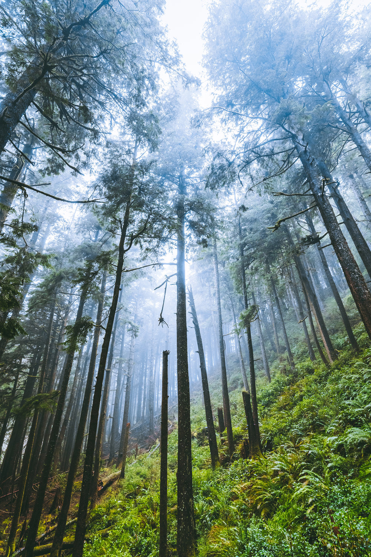 Washington-Forest-Smaller.jpg