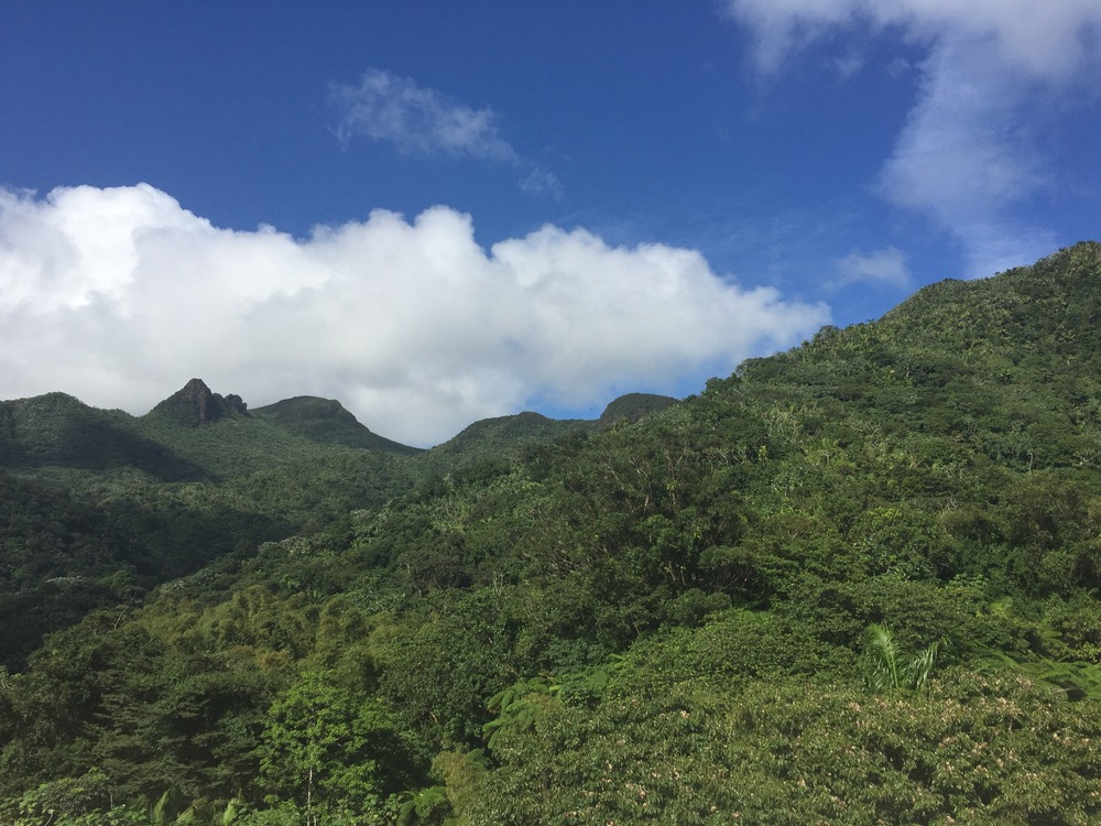 Group Tour of El Yunque National Forest