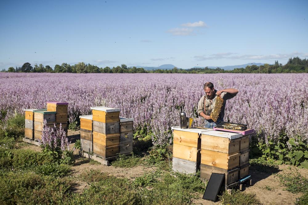 20150612_bees_005.JPG