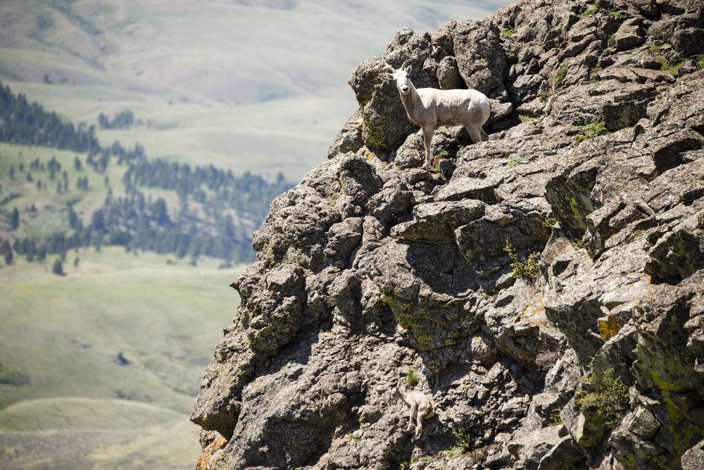 20160503_Bighorn_065.jpg