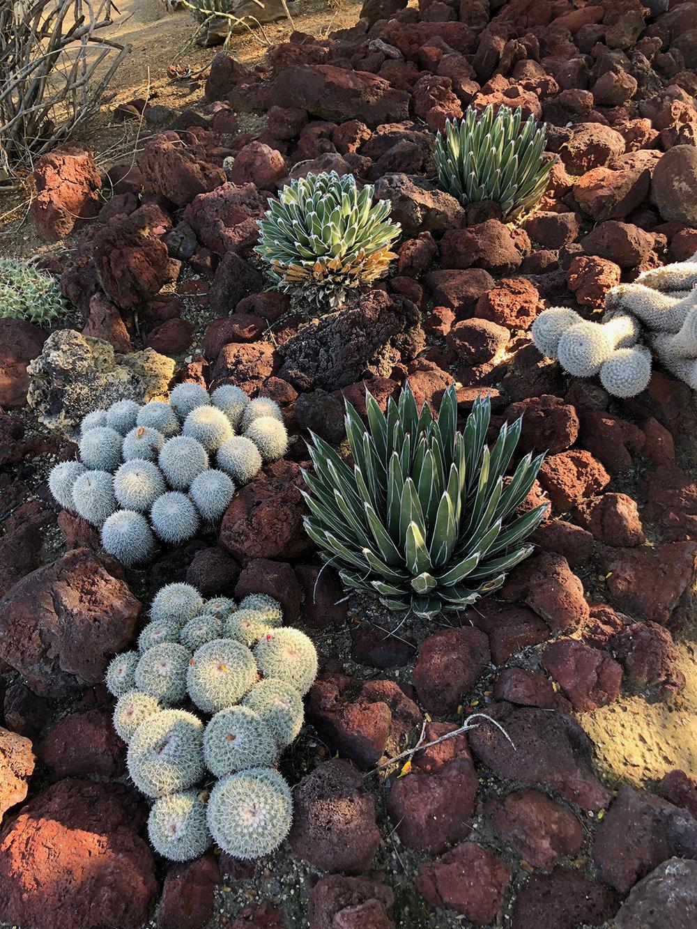 cactus_garden_2.jpg
