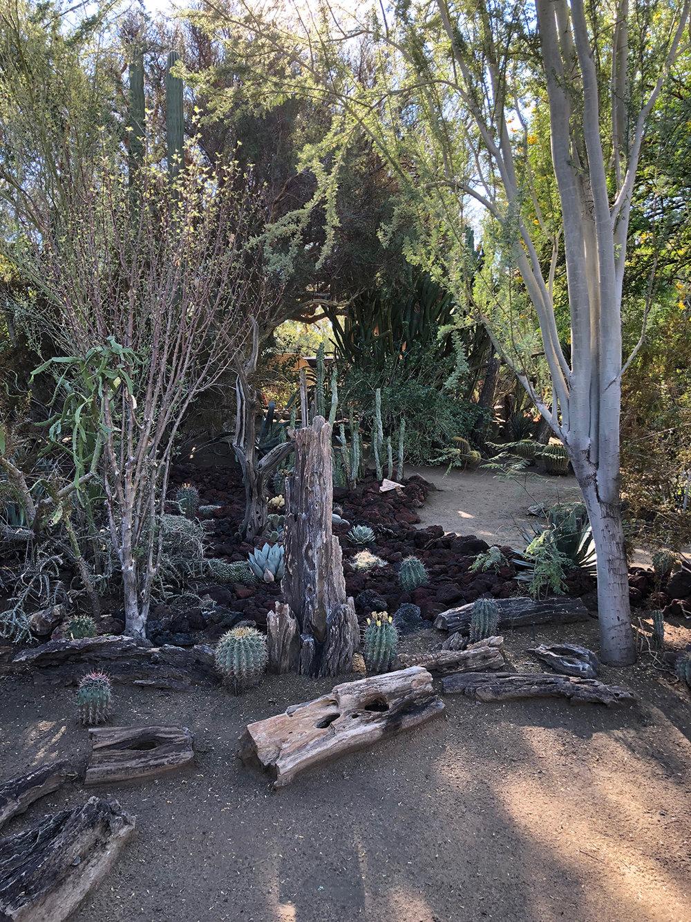 cactus_garden_1.jpg
