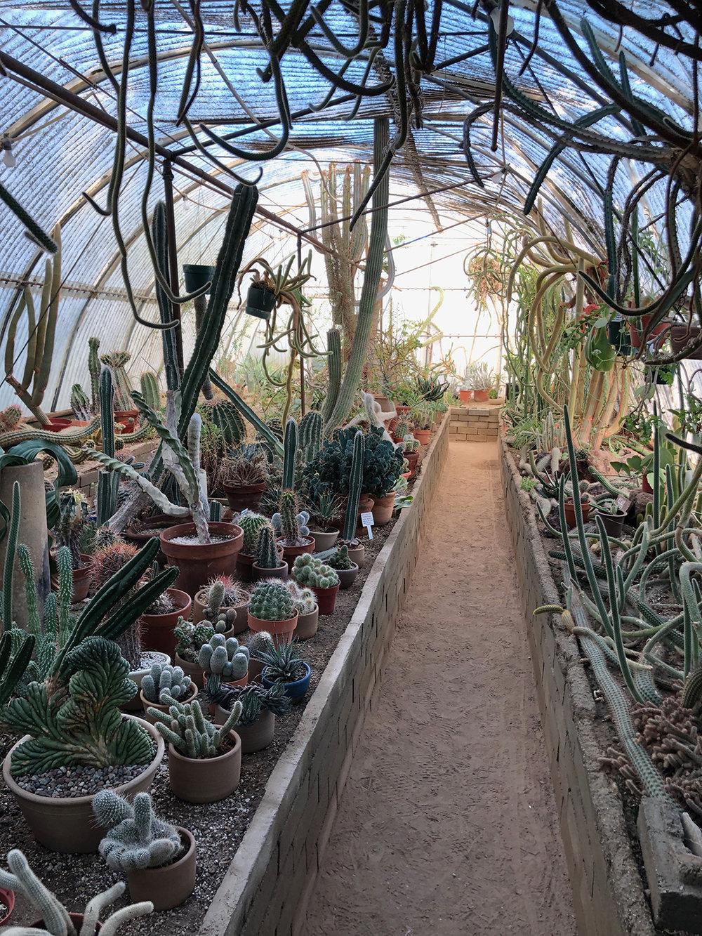 cactus_garden_3.jpg