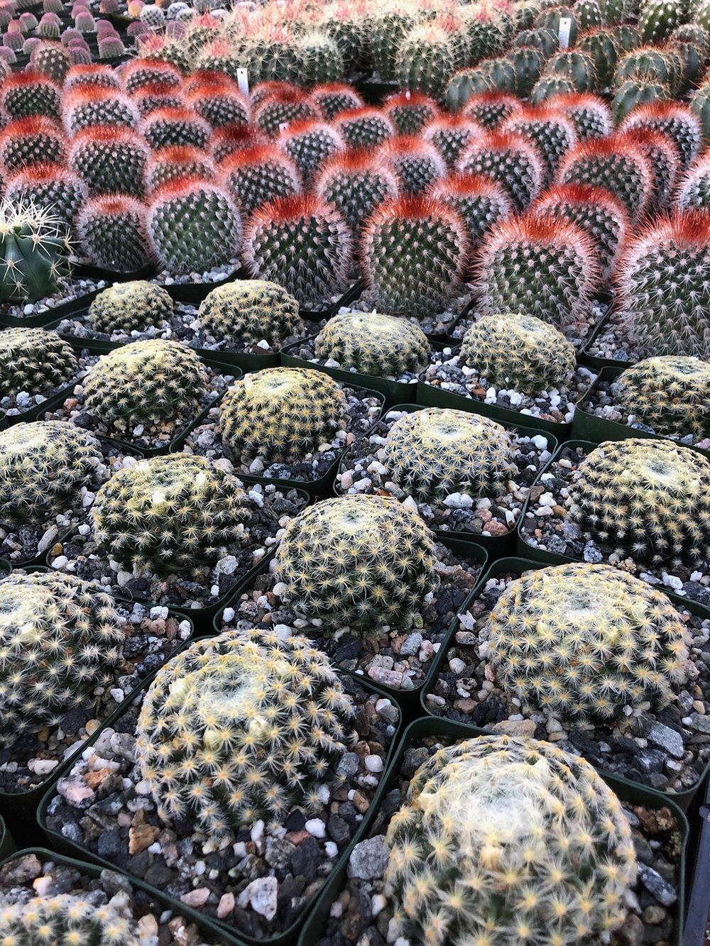 cactus_mart_2.jpg