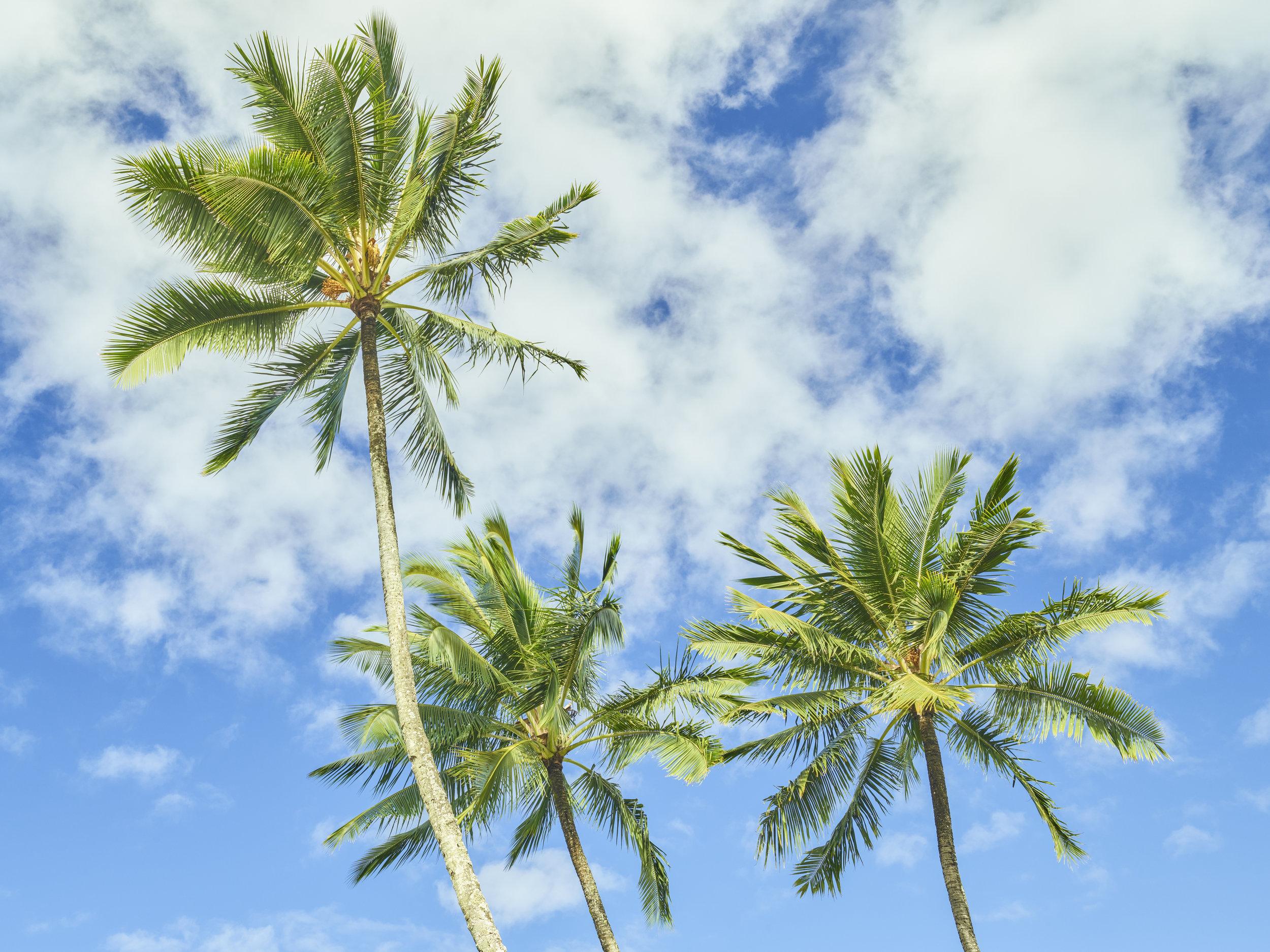palm trees u2014 jprensena