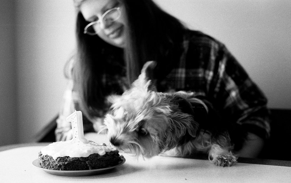 Teenage girl celebrating her yorkie puppies first birthday.
