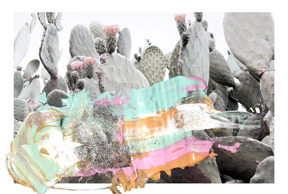 cacti-web1.jpg