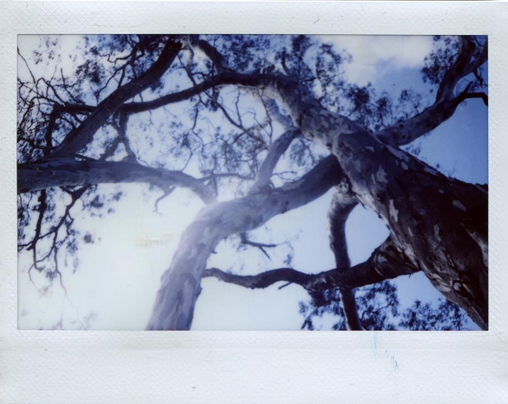 cobram_polaroid3.jpg