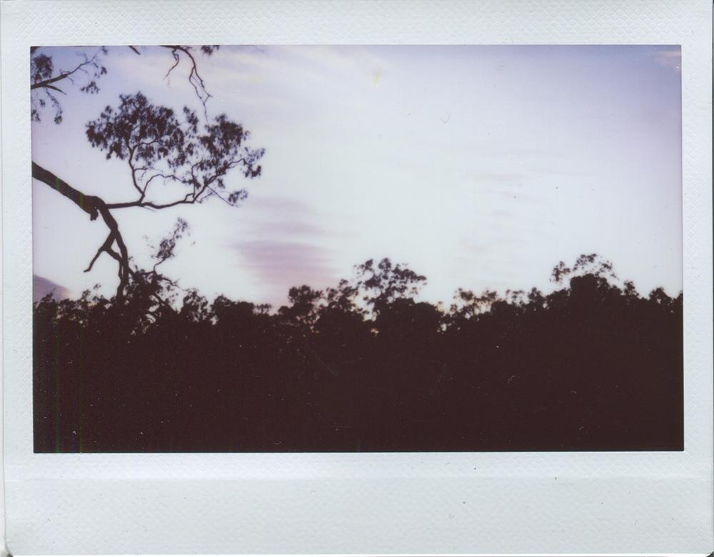 cobram_polaroid4.jpg