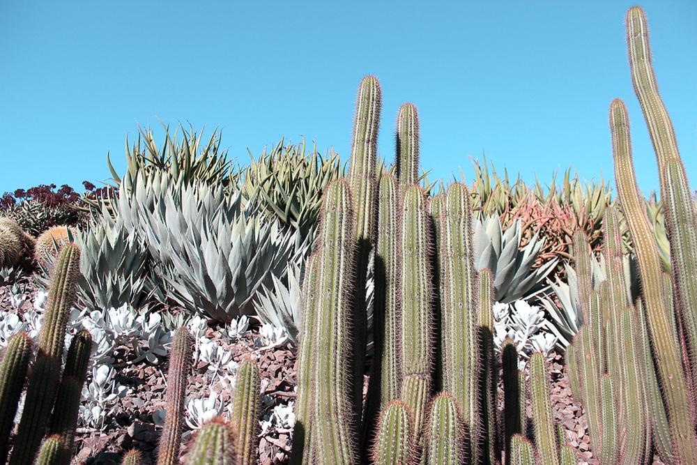 cacti_melbournebotanical.jpg