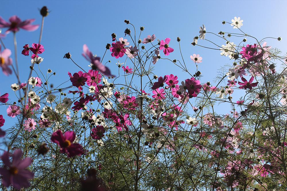 flower3-rachelurquhart.jpg