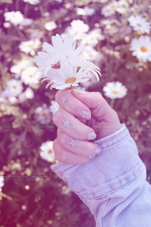 daisies2-web.jpg
