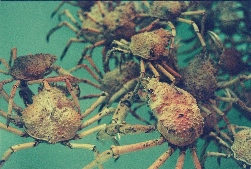 crabs35mm.jpg