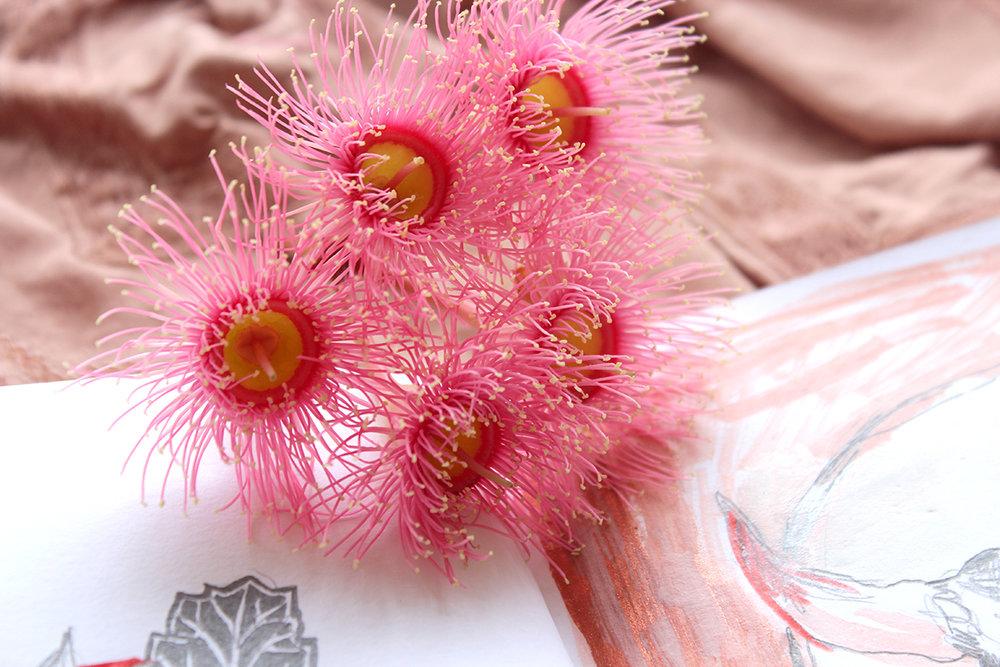 gum-blossoms-web.jpg