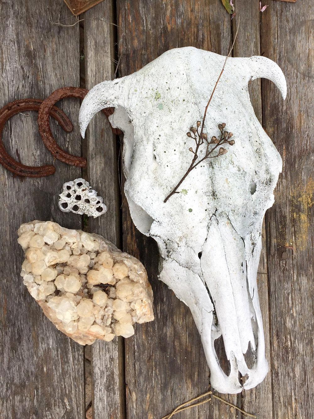 cow-skull-web.jpg