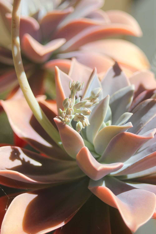 succulent-inspiration.jpg