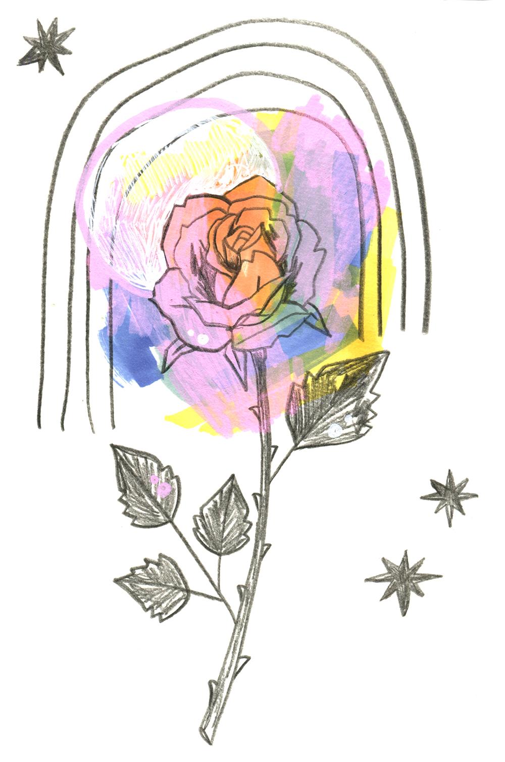 Rose-2-web.jpg