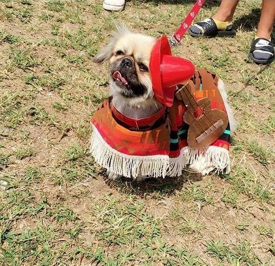 Taco Pup 3.jpg