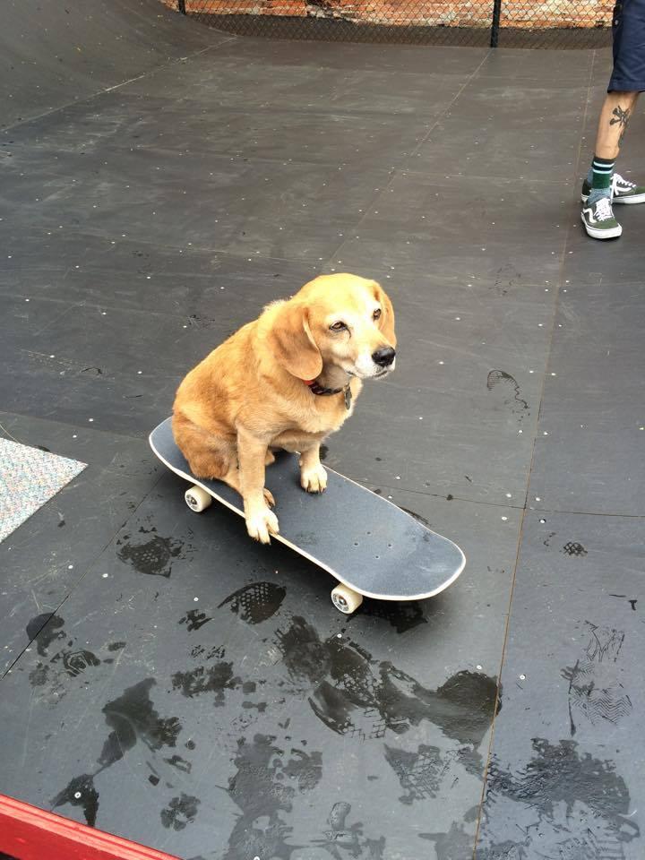 Skate Dog.jpg