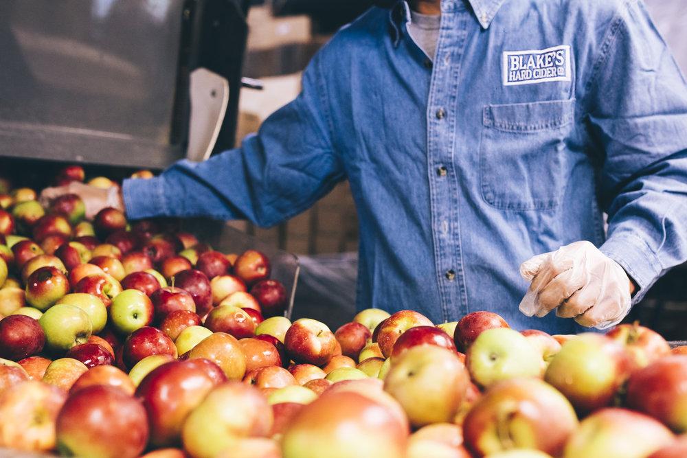 Apples at Blake's via Joe Gall of Blake's Hard Cider.